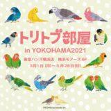 トリトブ部屋in横浜ハンズ(2021/3/1-28)